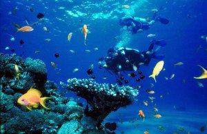 duiken op Koh Samui