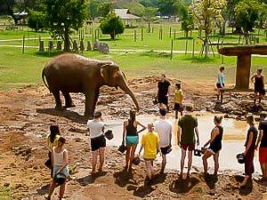 Olifanten verzorgen