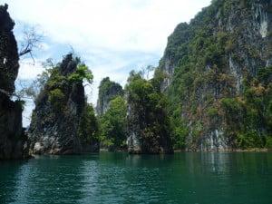 Jungle in Thailand
