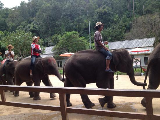chockchai elephant camp