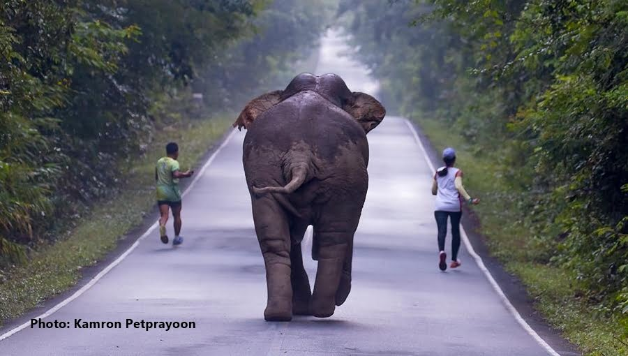 selfie met een olifant