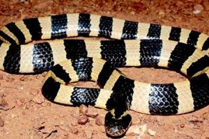 Wat te doen als een slang je aanvalt?