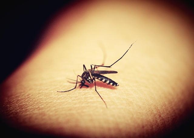 Hoe voorkom je dengue in Thailand
